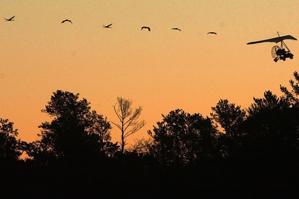 An ultralight pilot is silhouetted as he leads a small flock of experimental whooping cranes from Necedah National Wildlife Refuge in Necedah, Wisconsin, in 2001.
