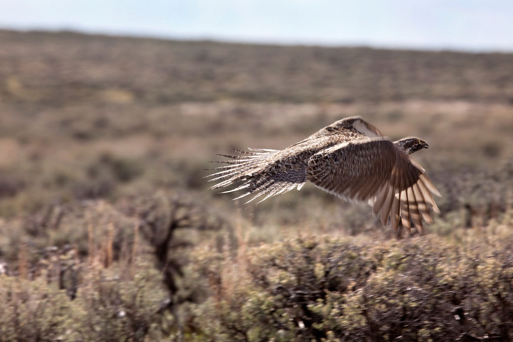 http://Lessons%20Learned%20from%20the%20State-Federal%20Effort%20to%20Conserve%20the%20Greater%20Sage-Grouse