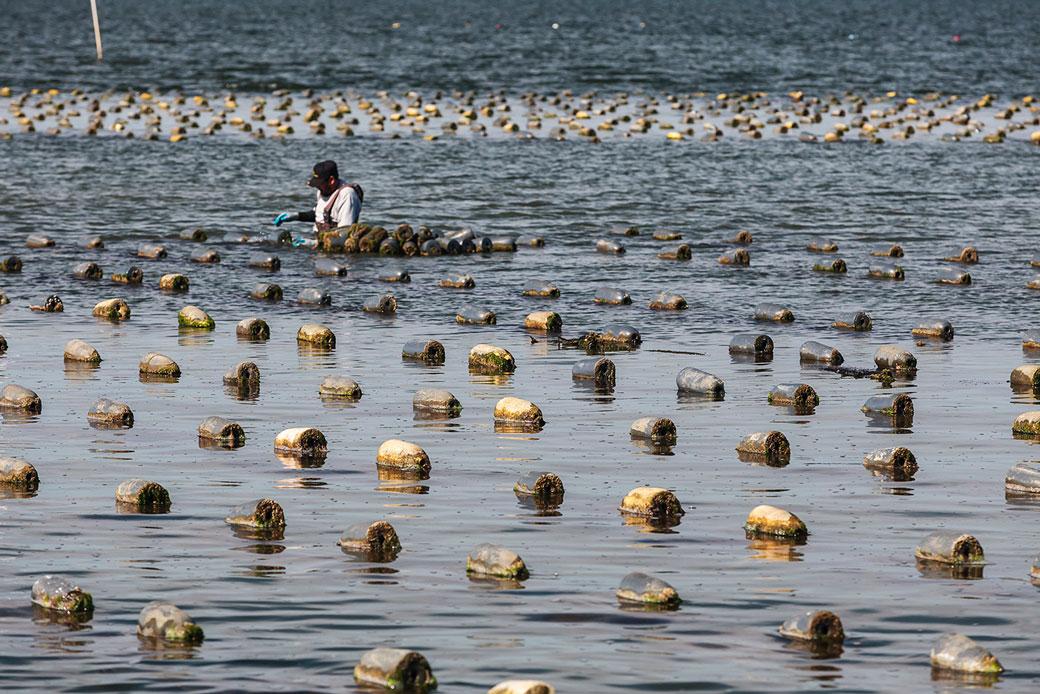 American Aquaculture