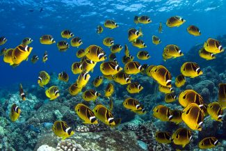 How Marine Protected Areas Help Fisheries and Ocean Ecosystems