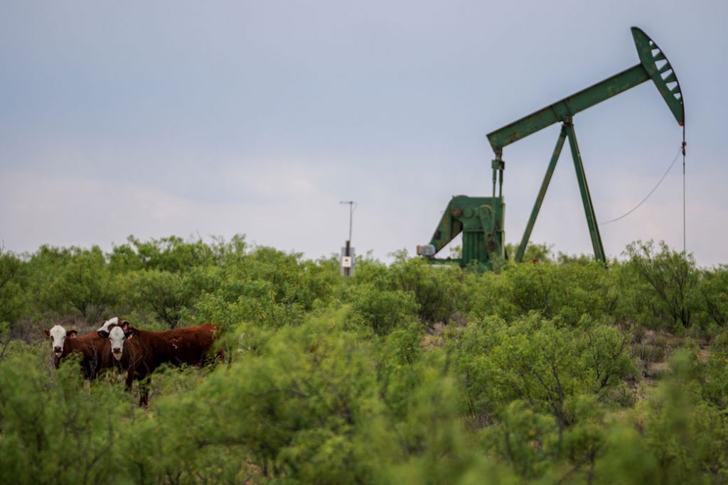 Cows stand in front of equipment used to extract oil in the Permian Basin in Texas, May 2018.