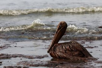 Trump's Offshore Drilling Plan Would Be an Environmental Disaster