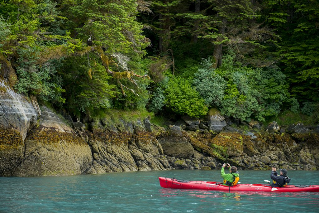 People in kayaks watch a bald eagle in Takatz Bay on Baranof Island, Tongass National Forest, Alaska.