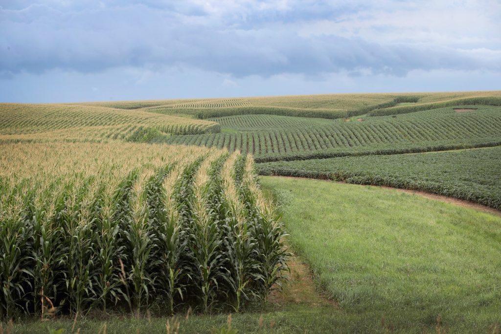 Corn and soybeans grow on a farm near Tipton, Iowa. July 2018.
