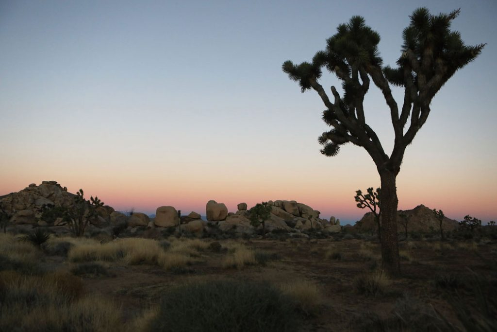 The sun sets at Joshua Tree National Park in California in January 2019.