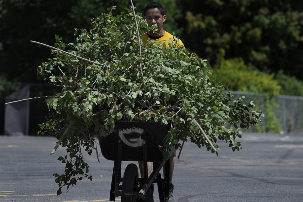 A teenager working with an AmeriCorps program uses a wheelbarrow to haul clippings to a garbage can after trimming bushes in the garden of a Denver elementary school, July 2008.