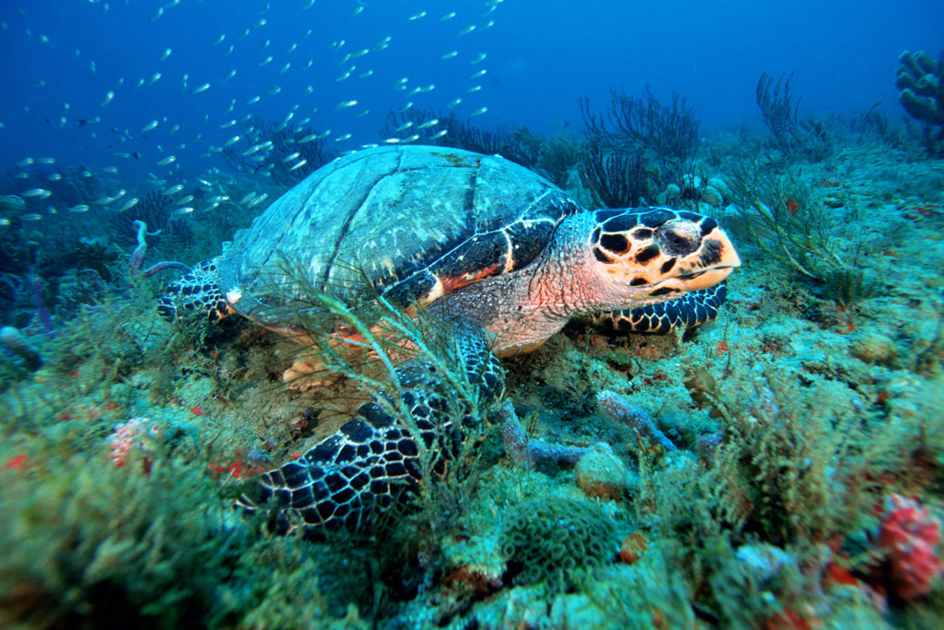 http://To%20Save%20Nature,%20We%20Must%20Protect%2030%20Percent%20of%20U.S.%20Ocean