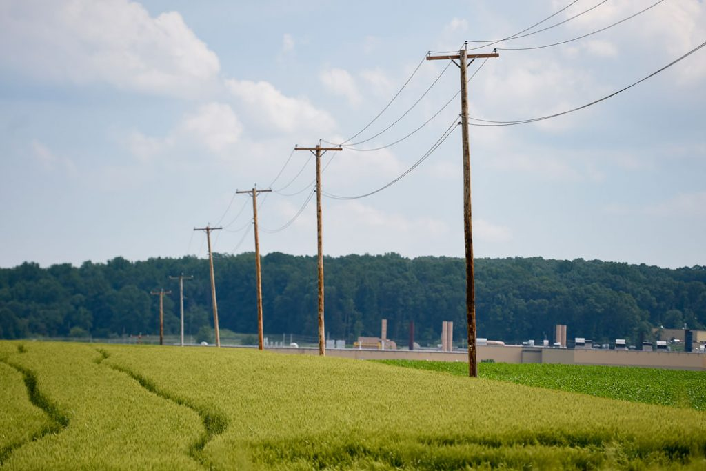 Wheat grows in a field next to utility poles along a road in Maxatawny Township, Pennsylvania, June 2021.