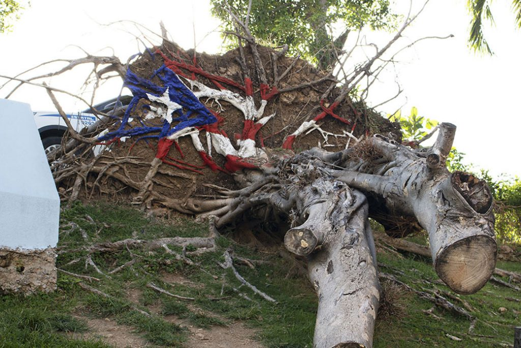A Puerto Rican flag is painted over a fallen tree in San Juan, Puerto Rico, May 2018.