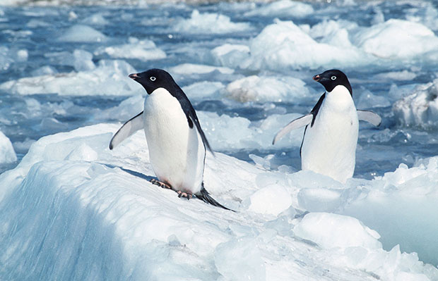 Two penguins are seen in the Antarctic's Cape Royds. Russia this week blocked efforts to create marine reserves off the coast of Antarctica, which would protect species and preserve habitats.