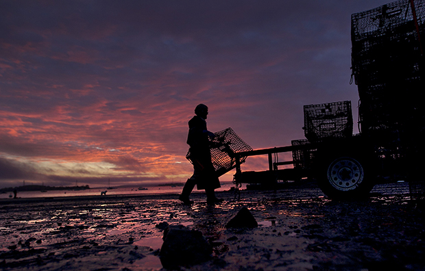 A new day dawns as the season comes to a close for lobsterman Norman Haynes, 69, as he loads traps onto a trailer, October 19, 2012, in Falmouth, Maine.