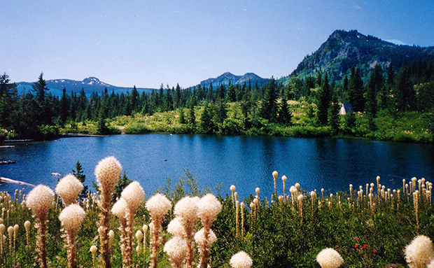 The Sawtooth Berry Fields are shown in the Gifford Pinchot National Forest in Idaho.