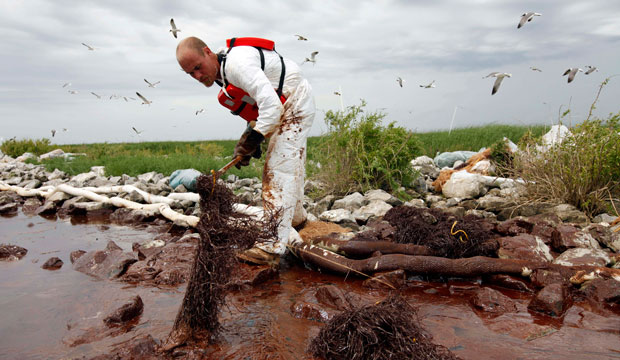 A worker picks up blobs of oil on Queen Bess Island near the Gulf of Mexico in Plaquemines Parish, Louisiana, on June 4, 2010.