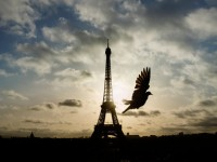 A bird flies in front of the Eiffel Tower
