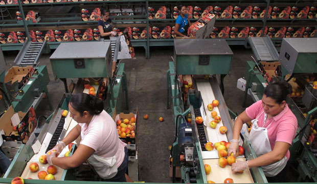 Workers prepare peaches to be put in boxes at a packing plant in Ridge Spring, South Carolina, on July 29, 2011.