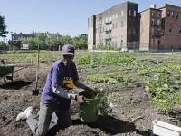 A man plants vegetables in a garden.