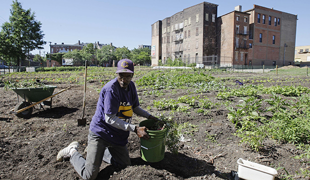 A man plants vegetables in a garden in the Over-the-Rhine neighborhood, July 2010, near downtown Cincinnati.
