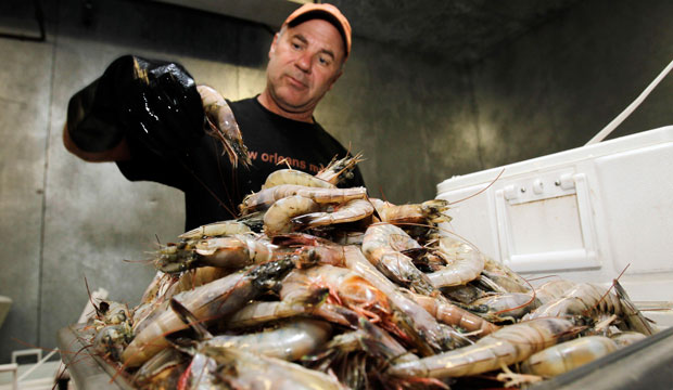 The Future of Seafood Security: The Fight Against Illegal
