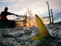 Commercial fishing in Chesapeake Bay